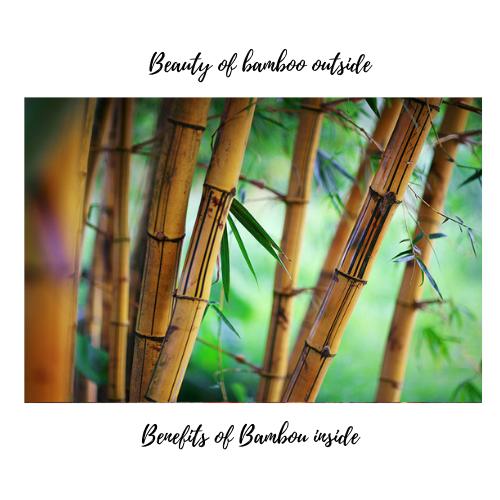 bambou beauty